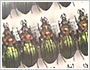The Biohistory of Carabus (Ground beetles) through DNA