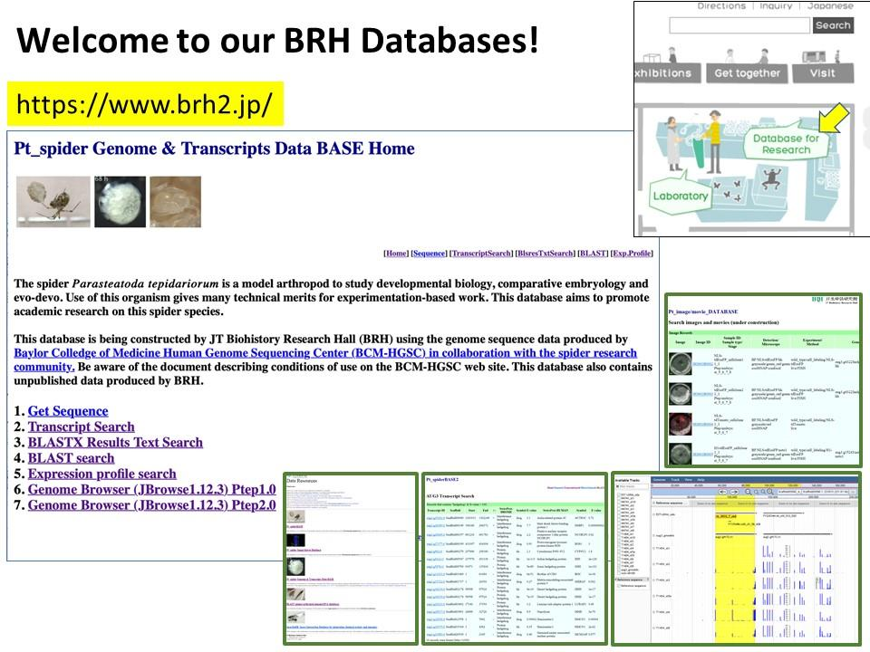 welcome to our BRH Database