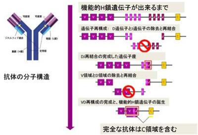遺伝子再構成 - meddic