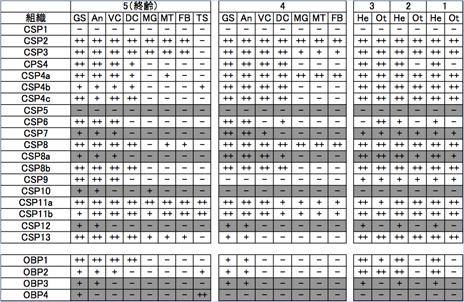 表2 ナミアゲハ幼虫のOBP、CSPの齢期別、組織別発現パターン
