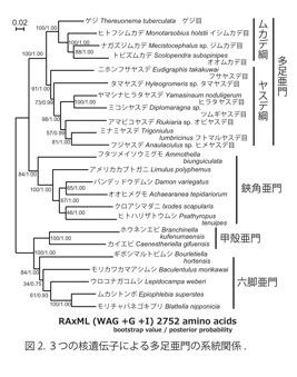図2.3つの核遺伝子による多足亜門の系統関係