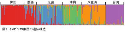 図3. イヌビワの集団の遺伝構造