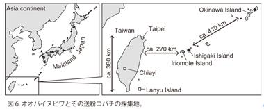 図6 オオバイヌビワとその送粉コバチの採集地。