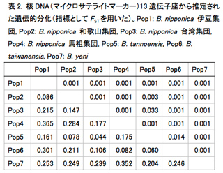 表2. 核DNA(マイクロサテライトマーカー)13遺伝子座から推定された遺伝的分化(指標としてFSTを用いた)。Pop1: B. nipponica 伊豆集団, Pop2: B. nipponica 和歌山集団, Pop3: B. nipponica 台湾集団, Pop4: B. nipponica 馬祖集団, Pop5: B. tannoensis, Pop6: B. taiwanensis, Pop7: B. yeni