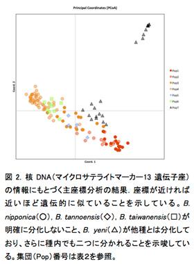 図2. 核DNA(マイクロサテライトマーカー13遺伝子座)の情報にもとづく主座標分析の結果.座標が近ければ近いほど遺伝的に似ていることを示している。B. nipponica(○), B. tannoensis(◇), B. taiwanensis(□)が明確に分化しないこと、B. yeni(△)が他種とは分化しており、さらに種内でも二つに分かれることを示唆している。集団(Pop)番号は表2を参照。
