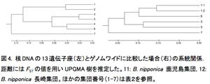 図4. 核DNAの13遺伝子座(左)とゲノムワイドに比較した場合(右)の系統関係.距離にはFSTの値を用いUPGMA樹を推定した。11: B. nipponica 鹿児島集団, 12: B. nipponica 長崎集団。ほかの集団番号(1-7)は表2を参照。