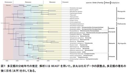 図7.多足類の分岐年代の推定.解析にはBEASTを用いた。赤丸は化石データの調整点。多足類の種名の後に目名(太字)を示してある。