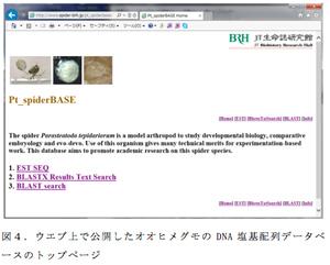 図4.ウエブ上で公開したオオヒメグモのDNA塩基配列データベースのトップページ